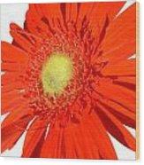 2006a2 Wood Print