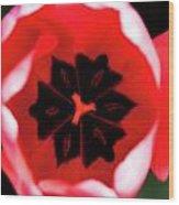2012 Tulips 03 Wood Print