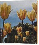 2012 Tulips 06 Wood Print
