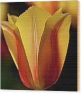 2012 Tulips Wood Print