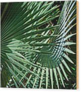 20120915-dsc09902 Wood Print