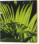 20120915-dsc09911 Wood Print