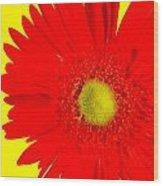 2024a2-005 Wood Print