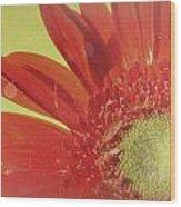 2026a5-003c Wood Print