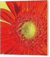 2026a5-008 Wood Print