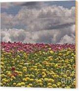 Flower Fields Wood Print