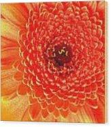 2116-001 Wood Print