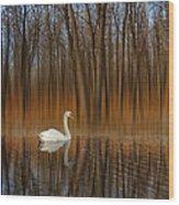 2243 Wood Print