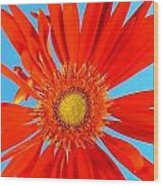 2277c2-007 Wood Print