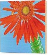 2278c2-003 Wood Print