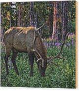 2374 Wood Print