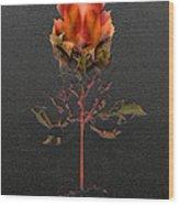2415 Wood Print