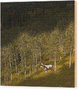 2438 Wood Print