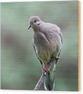 Mourning Dove Wood Print
