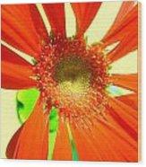 2505c1-019 Wood Print