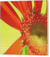 2506c1-003 Wood Print