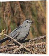 Gray Catbird Wood Print