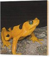 Harlequin Toad Wood Print