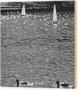 2boats2ducks In Black And White Wood Print