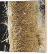 A Cattail Typha Latifolia Disperses Wood Print