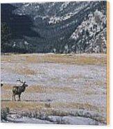 American Elk Cervus Elaphus Nelsoni Wood Print