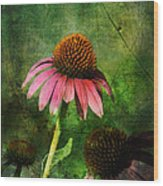 3 Amigos Echinacea Coneflower Grunge Art Wood Print