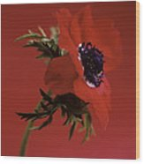 Anemone Flower (anemone Sp.) Wood Print
