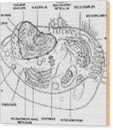 Animal Cell Diagram Wood Print
