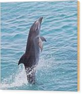 Atlantic Bottlenose Dolphin Wood Print