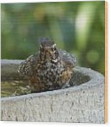 Bird Bath Fun Time Wood Print