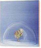 Bird Flu Wood Print