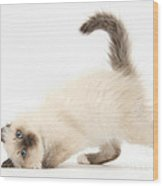 Birman-cross Kitten Wood Print