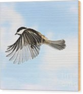 Black-capped Chickadee In Flight Wood Print