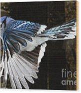 Blue Jay In Flight Wood Print