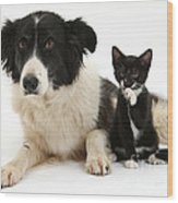 Border Collie And Tuxedo Kitten Wood Print