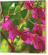 3- Bougainvillea Wood Print