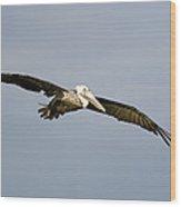 Brown Pelican Pelecanus Occidentalis Wood Print