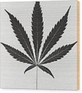 Cannabis Sativa, Marijuana Leaf Wood Print