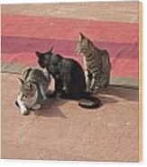 3 Cats Looking Pensive Wood Print
