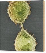 Cell Division, Sem Wood Print