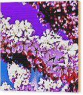 Cherry Blossom Art Wood Print
