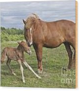 Chestnut Icelandic Horse With Newborn Foal Wood Print