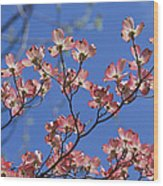 Close View Of Pink Dogwood Blossoms Wood Print