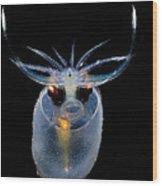 Cockatoo Squid Wood Print