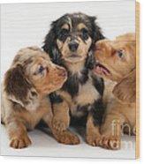 Dachshund Pups Wood Print by Jane Burton