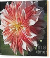 Dahlia Named Myrtle's Brandy Wood Print