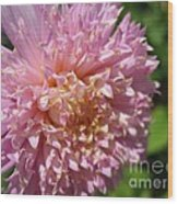 Dahlia Named Siemen Doorenbosch Wood Print