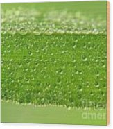 Drops In Leaf Wood Print