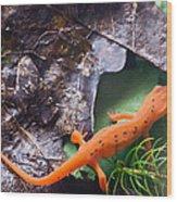 Easterm Newt Nnotophthalmus Viridescens 2 Wood Print