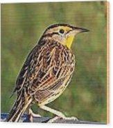 Eastern Meadowlark Wood Print